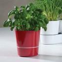 Maceta para hierbas 13 cm Hydro Herb de Rosti Mepal